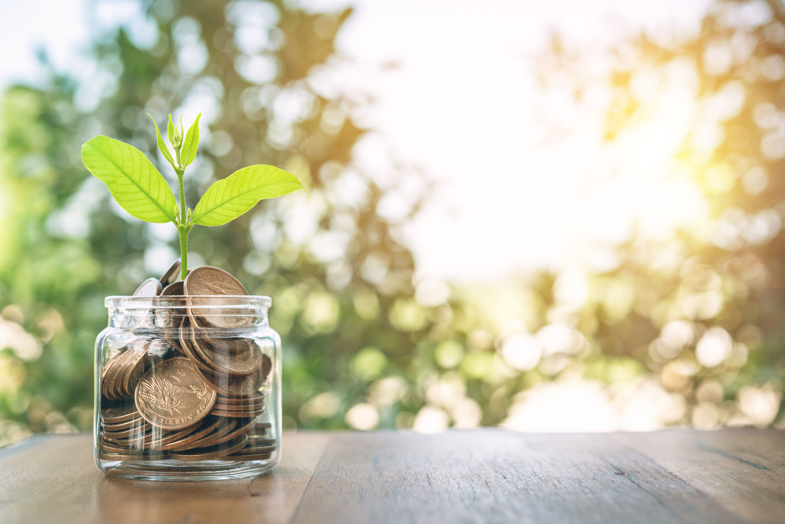 money and a plant in a jar, representing economic growth