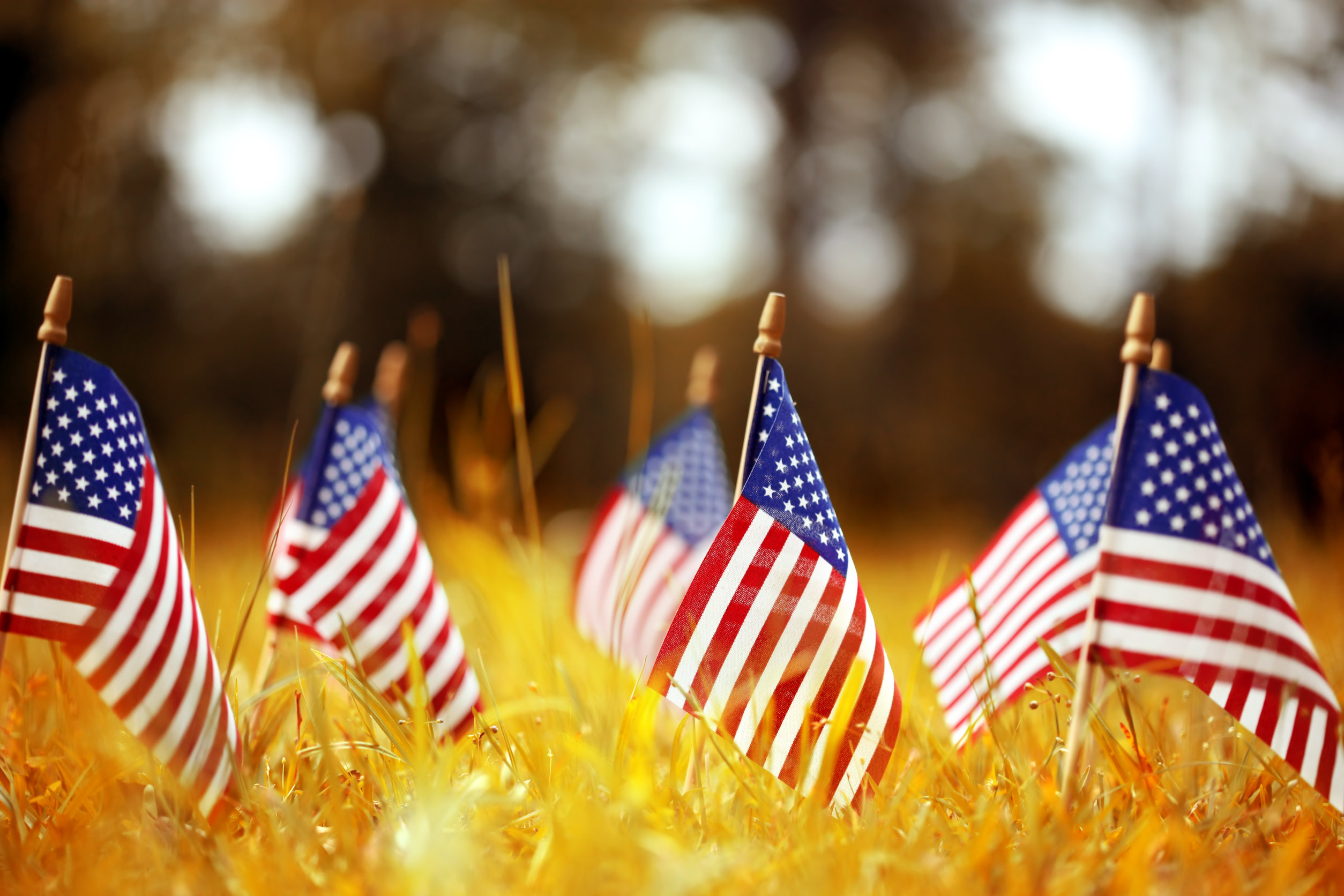 American flags in autumn grass